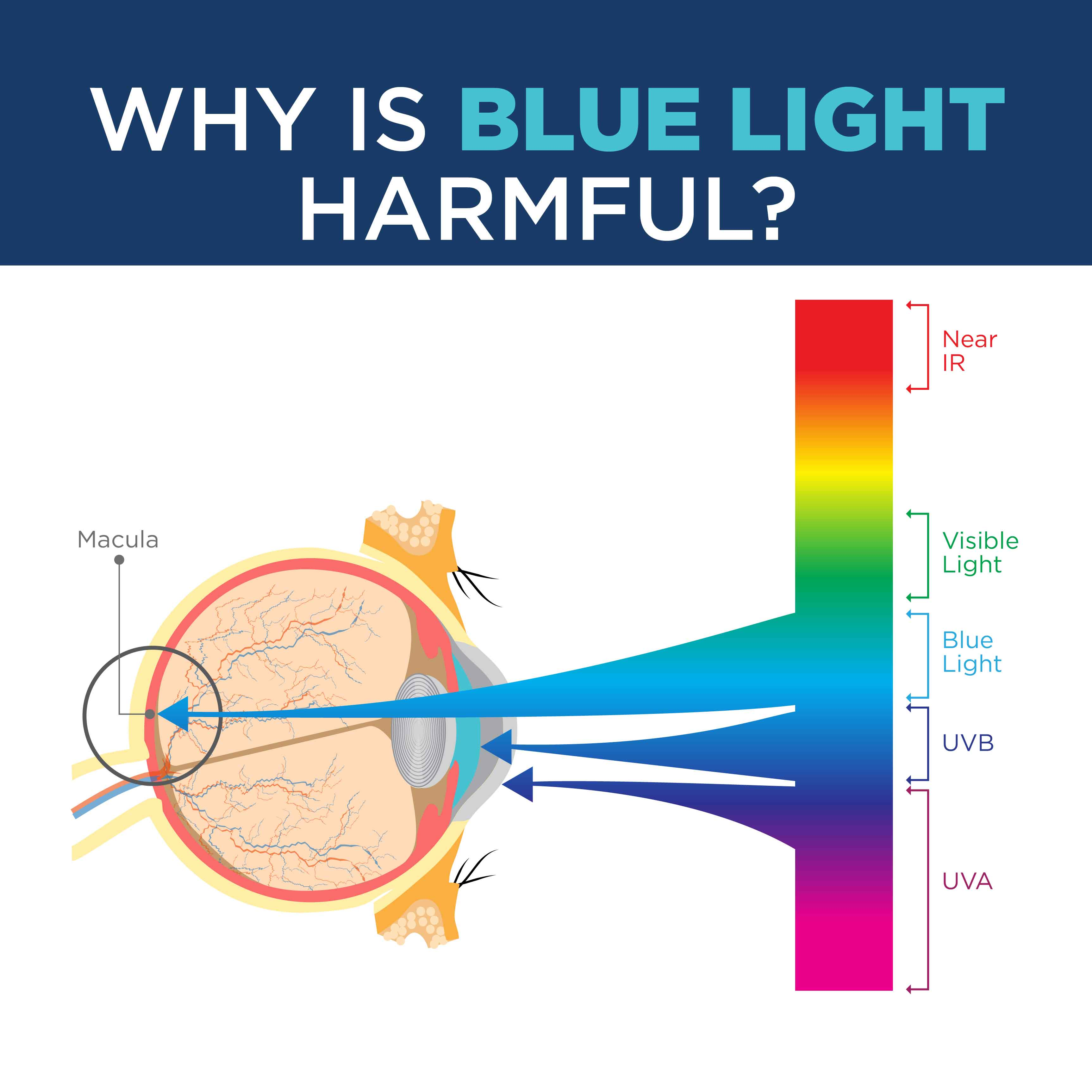 WHY IS BLUE LIGHT HARMFUL?